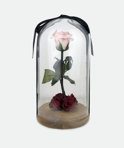 OHÁ Glass Vanaf € 39,99