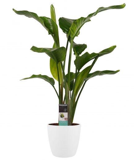 Pot-plant combinaties